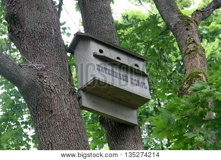 Nesting box on the tree in summer, Russia
