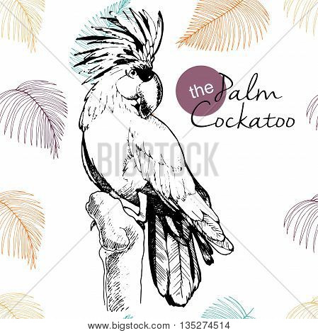 Vector hand drawn illustration of palm cocatoo parrot. Engraved vintage style exotic bird collection decorated with palm leaves. Wild animals portrait.