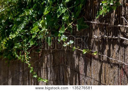 street wall with plants and decor of bamboo