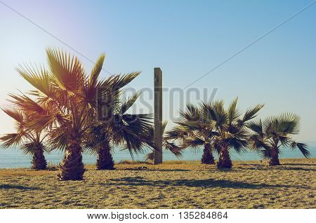 Some palm trees and a shower on a beach at the Costa Blanca at a beautiful sunny day with blue sky and orange and golden sunlight.