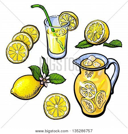 lemonade with lemon in a transparent jug, vector sketch hand-drawn illustration isolated on white background, cut the lemon juice and lemonade in a glass and fresh cold juice