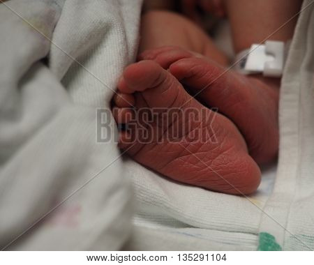 A newborn baby's cute feet and toes which are still red.