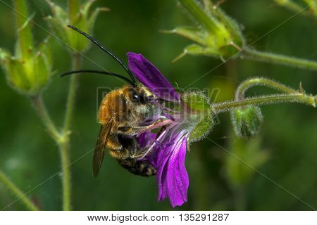 The fly sits on a violet flower