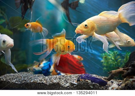 Aquarium Colourfull Fishes