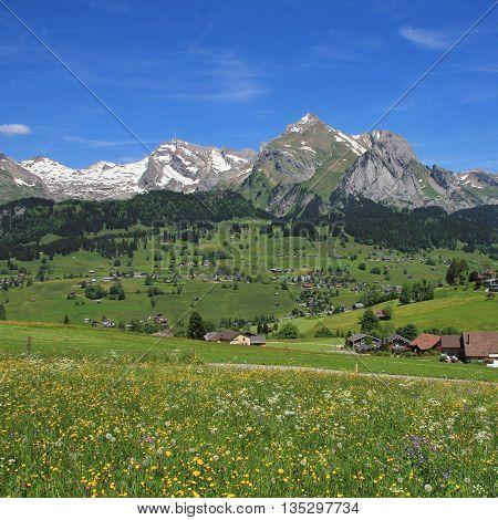 Meadow with wildflowers and Alpstein range Switzerland.
