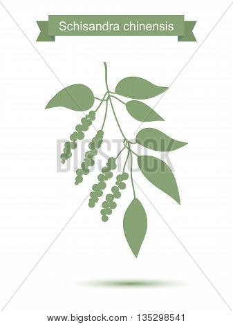 Branch with berries of Chinese Schisandra. Five flavor berry plant silhouette. Vector illustration isolated on white