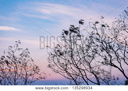 Silhouette of tree branches with nice sky in twilight time. Suitable for use as wallpapers.