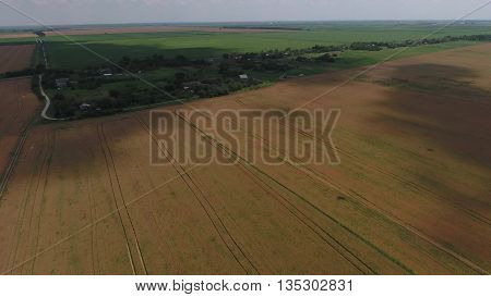 Field Of Ripe Wheat. View From Above.