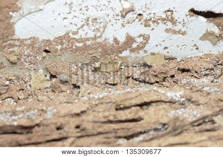 Wooden Walls Are Being Eaten By Termites.