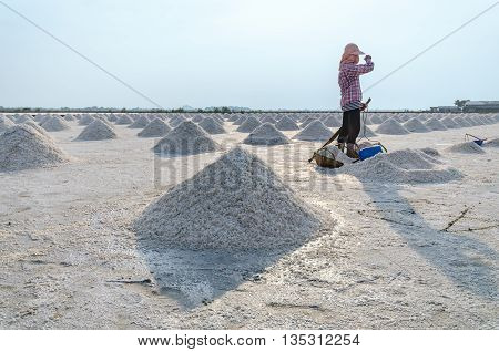 Worker standing at salt field that has pile of sea salt in Samut Songkhram province Thailand..