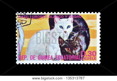 EQUATORIAL GUINEA - CIRCA  1974 : Cancelled postage stamp printed by Equatorial Guinea, that shows European black and white cat.