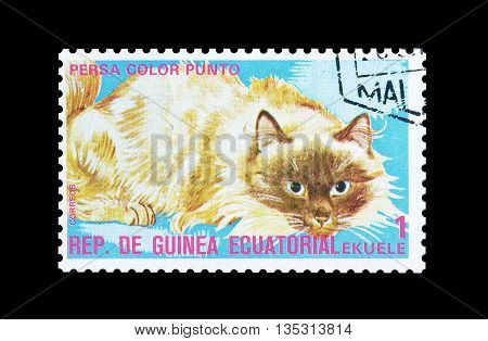 EQUATORIAL GUINEA - CIRCA  1974 : Cancelled postage stamp printed by Equatorial Guinea, that shows Persian colorpoint cat.