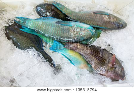 Fresh blue fish on ice in the local market