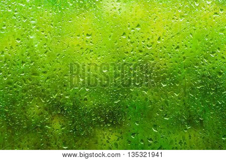 Rainy wet green eco seasonal summer natural background with water drops