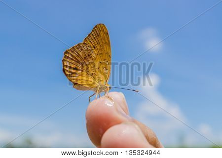 yellow Butterfly on finger in nature blue sky background The Common Yeoman Cirrochroa tyche rotundata