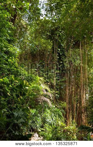 Evergreen jungle forest in sunny day. Natural background. Thailand.