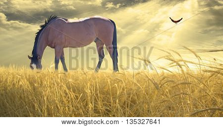 Horse grazing in field