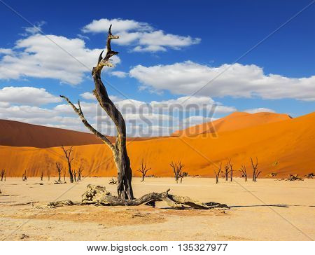 The long shadows of the evening sunset. The bottom of dry lake with dry trees in Namib-Naukluft National Park