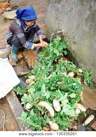 HA GIANG, VIET NAM, June 20, 2016 ethnic Hmong woman, highland ha Giang, Vietnam, clean vegetables