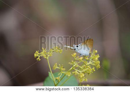 beautiful butterfly, colorful butterfly ,Butterfly in garden