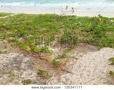 Mae Ramphueng beach in nature Rayong Thailand