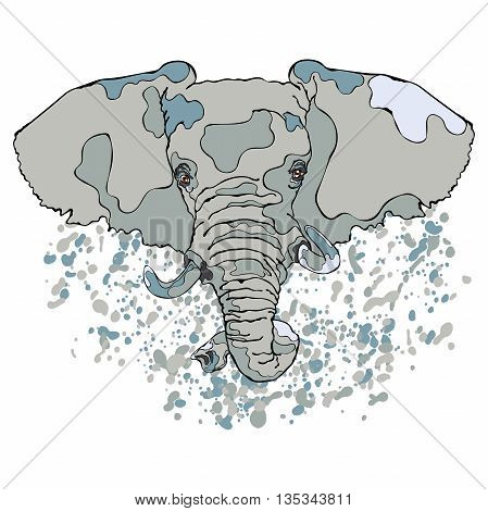 Animal. Elephant. Close-up. Splashes and drops of paint. Isolated vector object on white background.