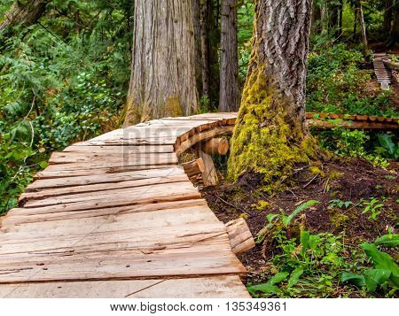 Wooden path through the green rain forest