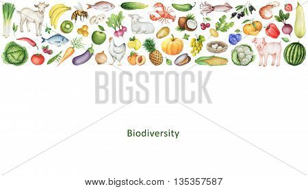 Watercolor banner of the biodiversity of healthy eating. Collection of fruits, vegetables, animals, fish and birds. Space for your text.