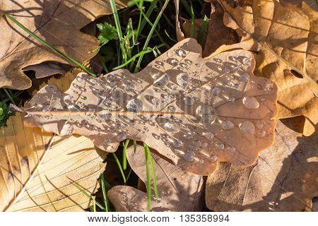 Fallen autumn leaves after a rain close up