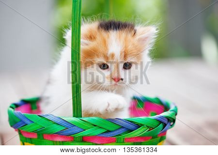 Kittens in a colorful basket. Sunny summer day