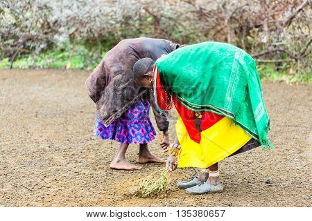 Massai women sweeping the floor doing chores