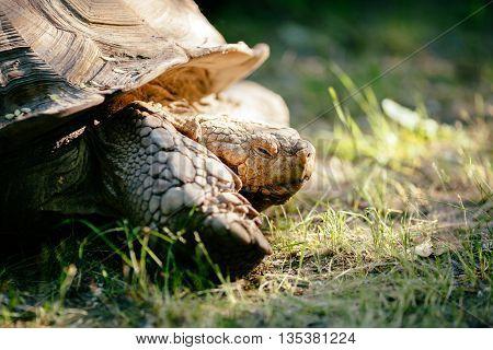 Turtle outdoors crawling on ground in a nature