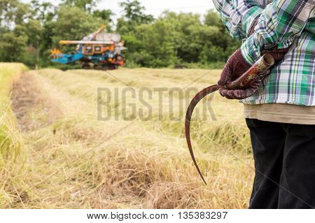 Sickle is a hand-held traditional agricultural tool will be replaced by tractor a new machine to harvest