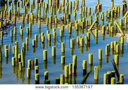 Green pilings in blue water of Astoria Oregon