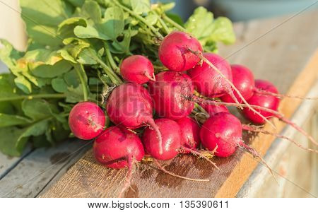 Fresh radishes and lettuce on boards, summer photo.