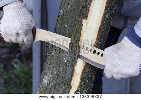 man removes the bark from a tree