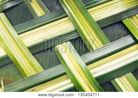 botany, nature, wickerwork, eco and flora concept - green palm tree leaf grid texture
