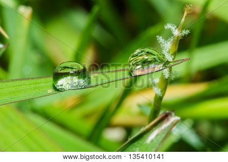Dew drops on fresh green grass leaves