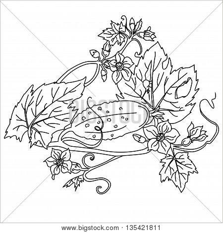 Black. Cucumber Isolated on White. Flat Design Style. Vector illustration. Cartoon vector Illustration.