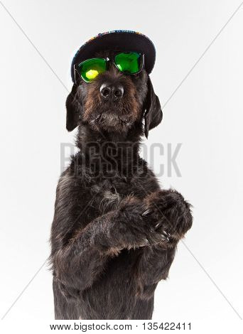 Black dog posed with sunglasses and cap, close-up.
