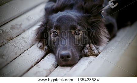 Portrait of sad shaggy black dog lying on the bench