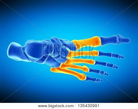 3d rendered, medically accurate illustration of the metatarsal bones