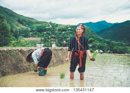 MUCANGCHAI, VIETNAM - JUNE 12, 2016: Unidentified farmers work in a terraced rice field in Mucangchai, Vietnam. Farmer start working for a new rice season in May and harvest in September.