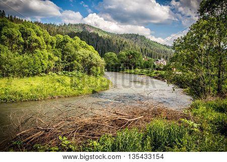Carpathian mountain meandering river flowing between trees