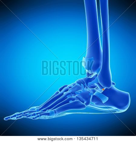 3d rendered, medically accurate illustration of the lateral talocalcaneal ligament