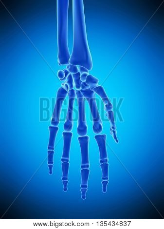 3d rendered, medically accurate illustration of the hand bones