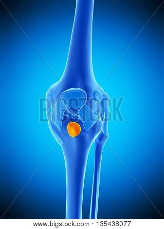 3d rendered, medically accurate illustration of the deep infrapatellar bursa