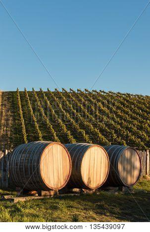three oak barrels in vineyard with copy space
