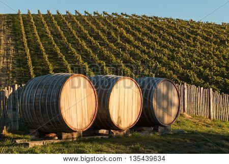 closeup of oak barrels with vineyard in background