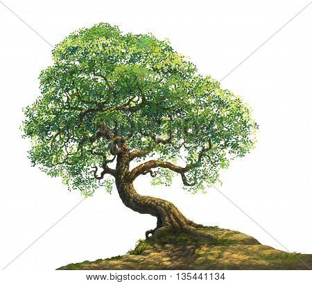 a big tree on hill isolated on white background illustration